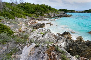 Nonsuch Island