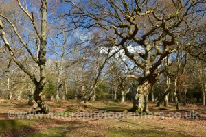 Matley Wood, New Forest National Park