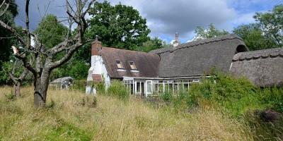 Rewilding a Hampshire garden - an example of a country garden hay meadow