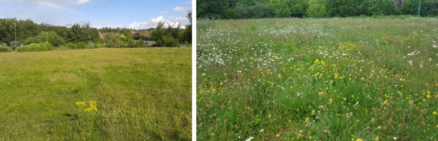 St Marks Meadow July 11 2014 Small (2)