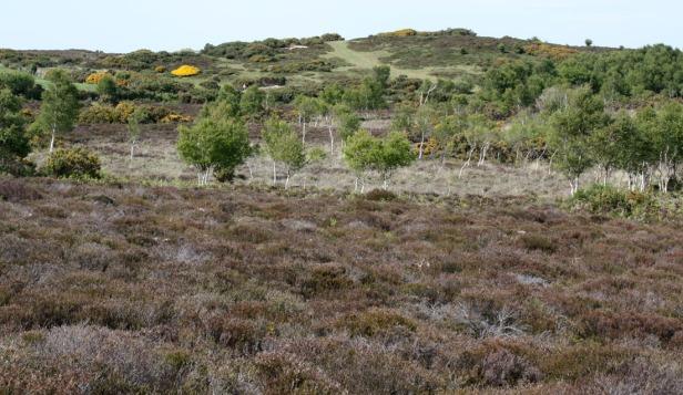 photo 5 - heathland (002)