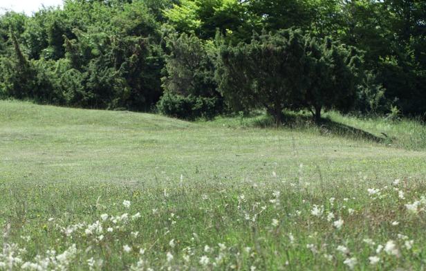 photo 6 - chalk grassland (002)